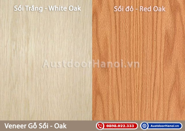 Veneer gỗ sồi đỏ (Red Oak) và sồi trắng (White Oak))