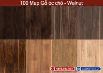 map van go oc cho walnut